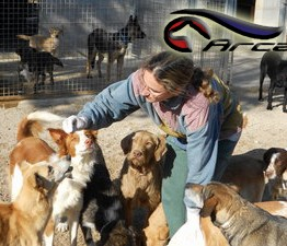 Volunteer with the dogs at ARCA Tortosa