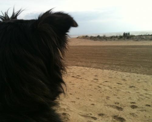Elsa on the beach