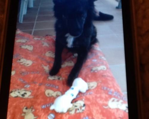 Elsa with her bone