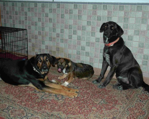 Buster Rocky and Ruby