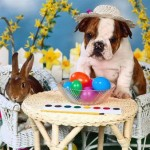 Happy Easter from A.R.C.A.