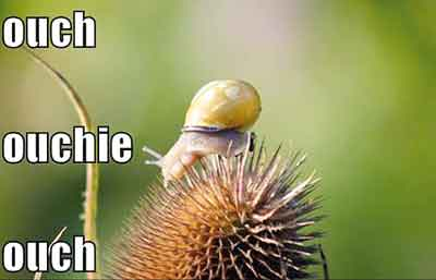 ouch snail