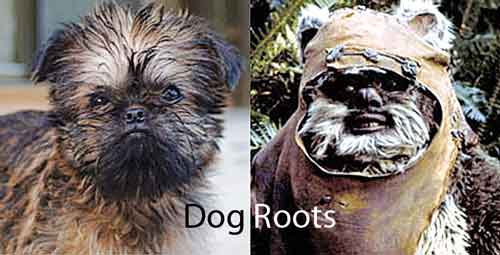 dog roots