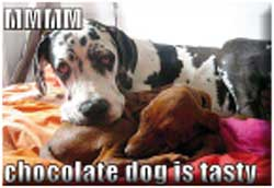 CHOCLATE DOG