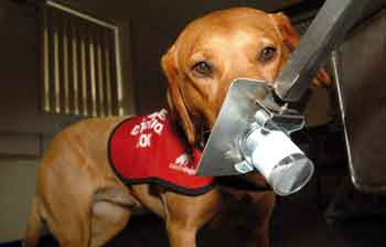 dogs detect cancer