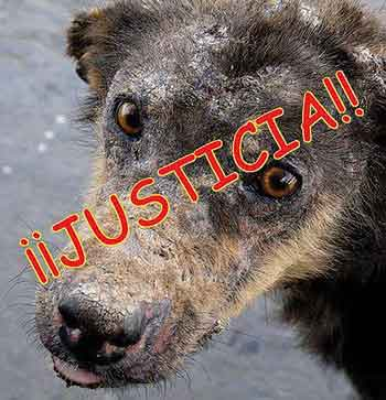 justic for animals